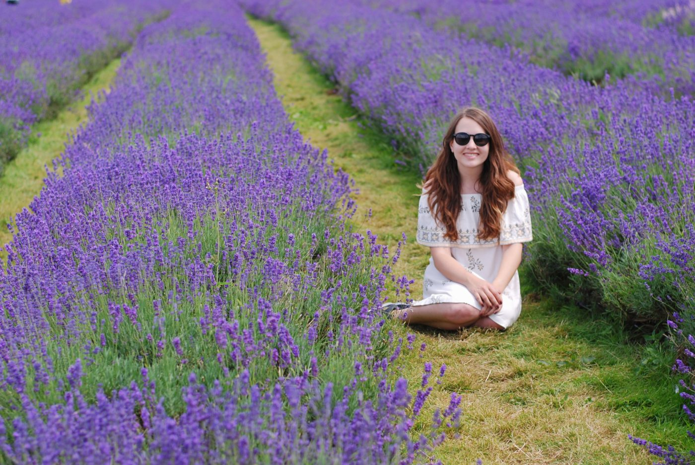 london lavender field mayfield